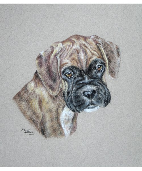 Hundeportrait Pastell 1