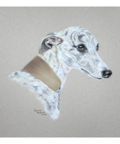 Hundeportrait Pastell 2