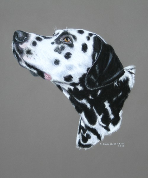 Hundeportrait Pastell 3