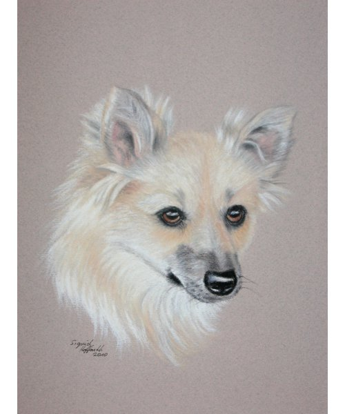 Hundeportrait Pastell 4
