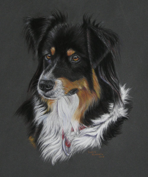 Hundeportrait Pastell 5