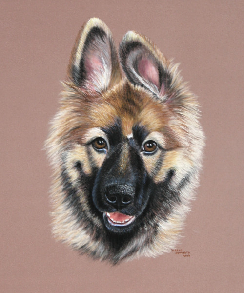 Hundeportrait Pastell 6