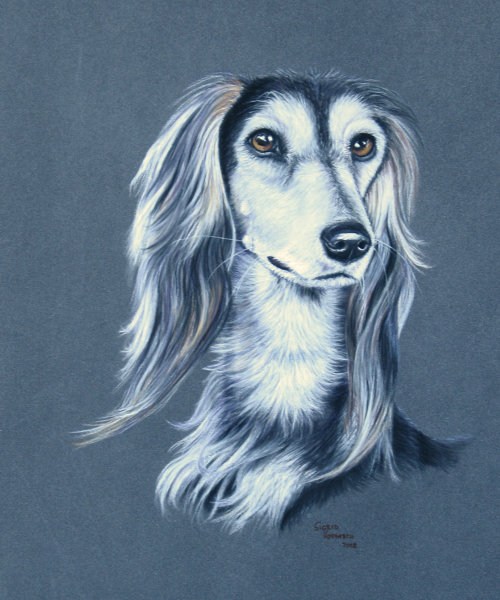 Hundeportrait Pastell 7