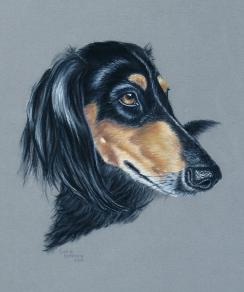 Hundeportrait Pastell 8