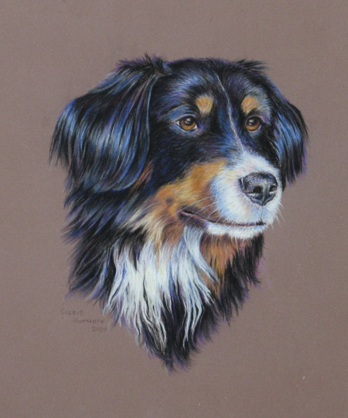 Hundeportrait Pastell 9